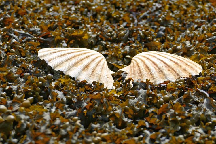 High angle view of seashell on ground