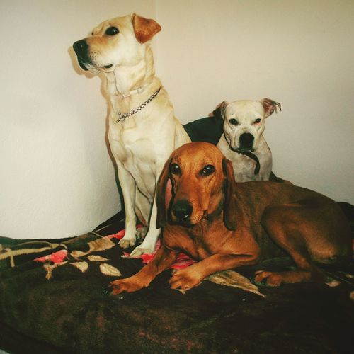 Portrait of relaxed dogs