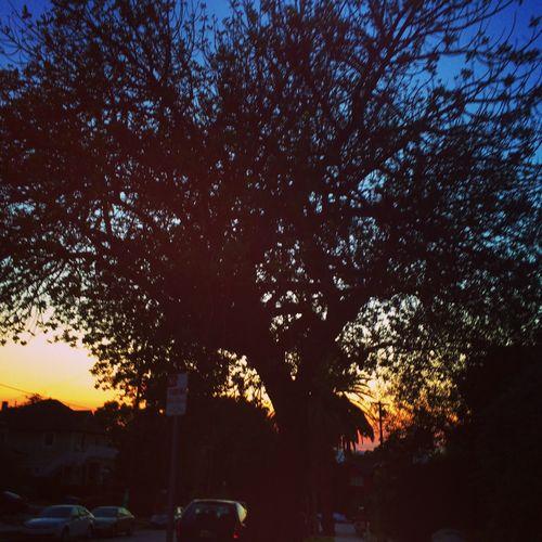 Nature silhouette