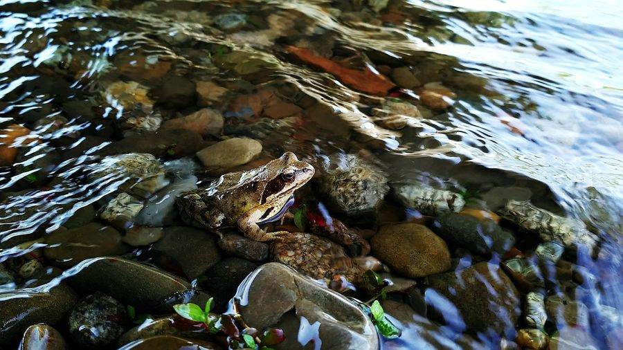 High angle view of toad in water