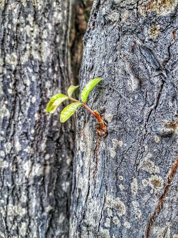 Life Nature Green Color Retoño Renacer Perspectives On Nature