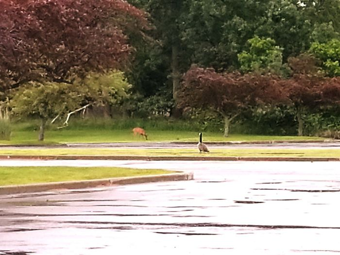 Tree Water Nature Outdoors Day Beauty In Nature Road Adults Only People Men Bird deer goose