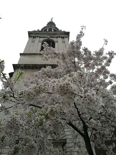 St. Mary-le-Bow in all its prime Blossom Cherry Blossoms Bow Bells Tree Branch Sky Architecture Building Exterior Built Structure Historic Place Of Worship Steeple Church