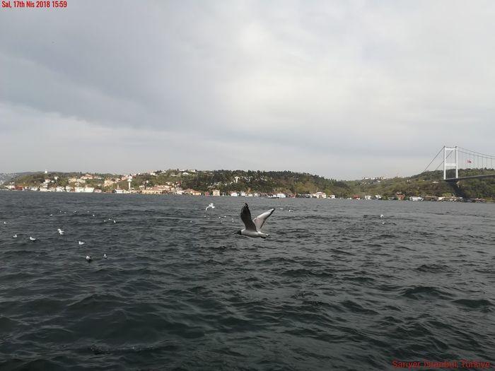 Bird Flying Water Sea City Cityscape Urban Skyline Whale Spread Wings Humpback Whale
