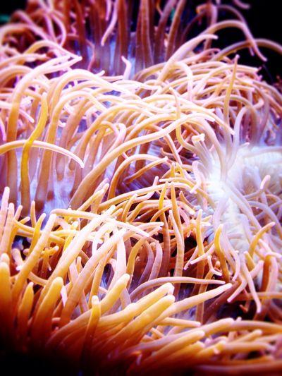 Anemone Underwater Sealife