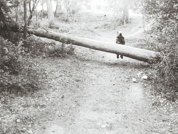 Tree Blancoynegro Niño Bosque