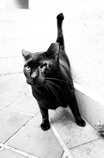 Animal Themes Cat Day Domestic Animals Domestic Cat Feline Full Length Gritty Mammal No People One Animal Outdoors Pets Portrait Street Tiled Floor Whisker