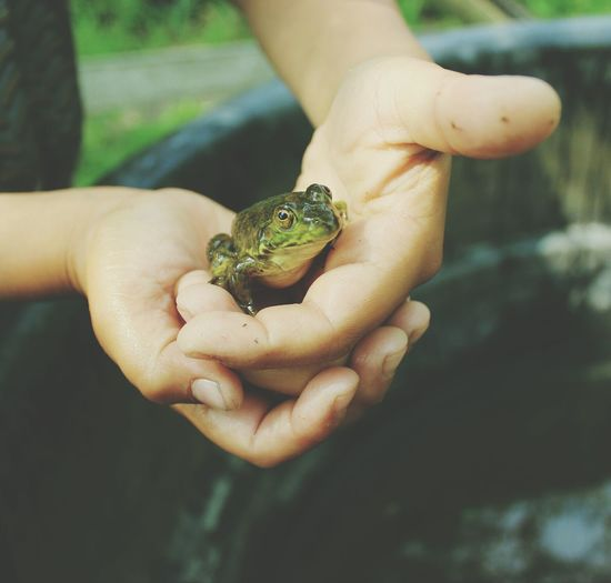 Boy Holding Frog In Hands