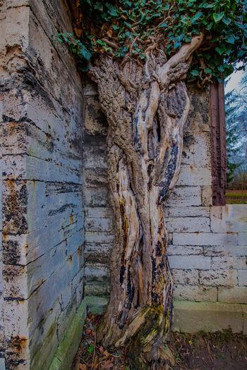 Goethe Haus Goethe Weimaraner Weimar Ziseetheworld Wooden Texture Architecture GERMANY🇩🇪DEUTSCHERLAND@ Germany Tree Trunk Tree Leaves
