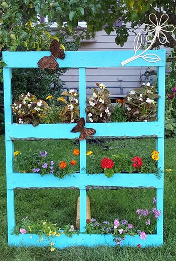 Wooden pallet garden Blue Day DIY Flowers No People Outdoors Painted Pallet Garden