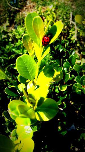 Esta pequeña me hizo el día Catarinita Arbusto Happy