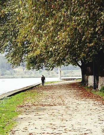 Ioannina, Greece Ioannina Lake View Lake Pamvotis Lonelyman Walking Around Walk Fall Leaves Leaves Fall Season Adventures In The City