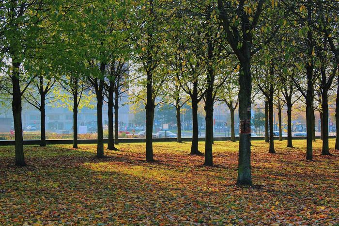 Tree Nature Autumn Landscape Sunset Grass Beauty In Nature Tranquil Scene Outdoors Growth City Citypark