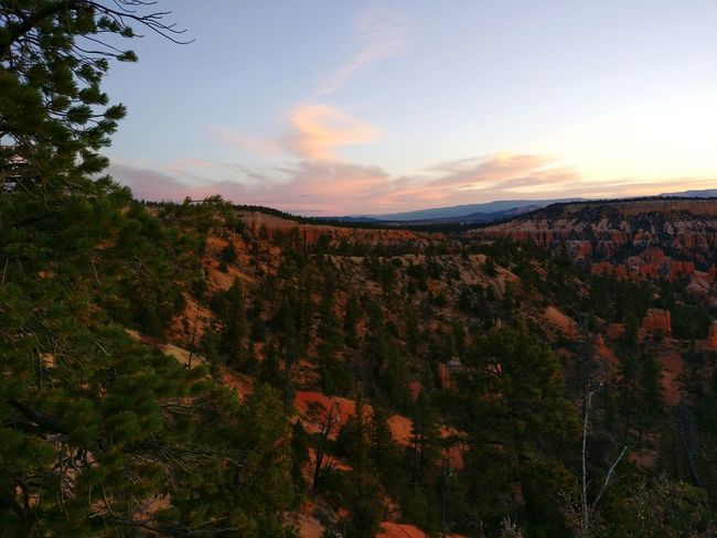 Tree Cloud - Sky No People Beauty In Nature Sky Nature Scenics Landscape Sunset Outdoors Day Bryce Canyon Bryce Canyon National Park Sunrise Nature Tranquility Awe Inspiring Adventure Beauty Pink Skys Perspectives On Nature