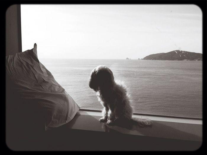 해운대 한화리조트에서 말티즈 노령견 건강하자! 방울씨? Puppy Dog Maltise 부산(Busan)