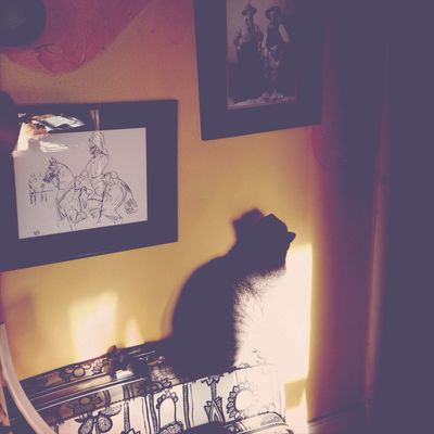 Ilovemycat Mycat Purehipstamatic Look Up