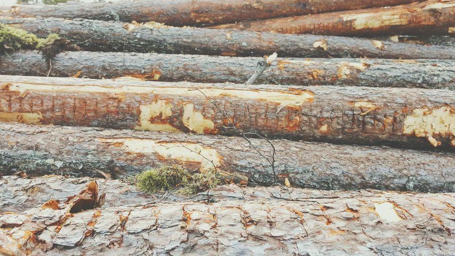 Wood Lumber, Timber, Planks, Planking; Logs, Sawlogs