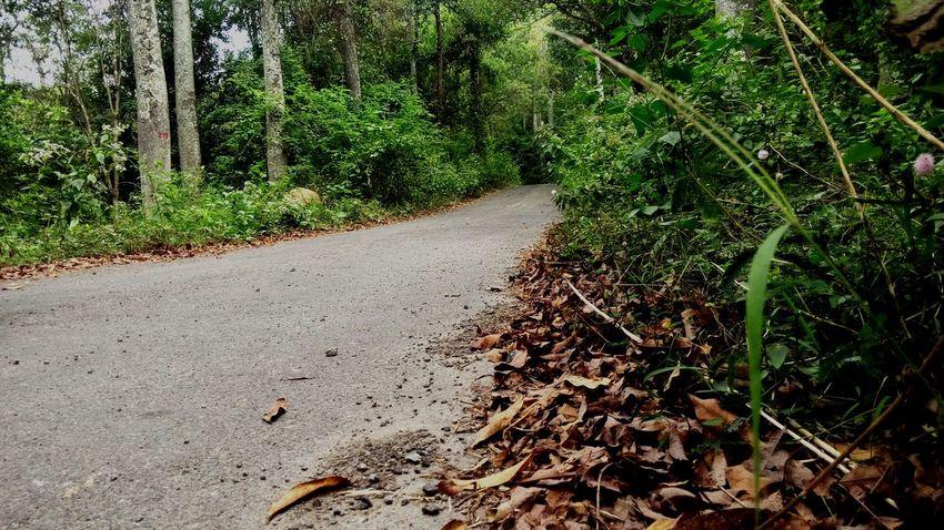 Showcase: January Jungle Forest I LOVE PHOTOGRAPHY Mobilephotography Roadside Jungle Road