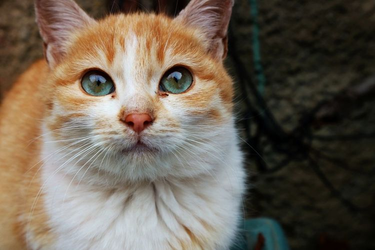 cat EyeEmNewHere Follow4follow Followme Likes Portrait Feline