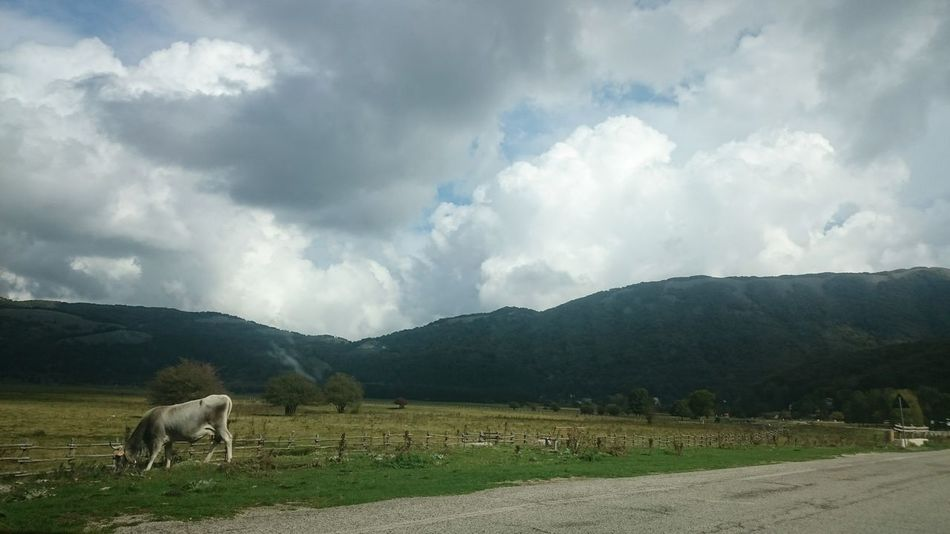 Lago Laceno Italy Italia Italien Avellino Irpinia Landscape Cow