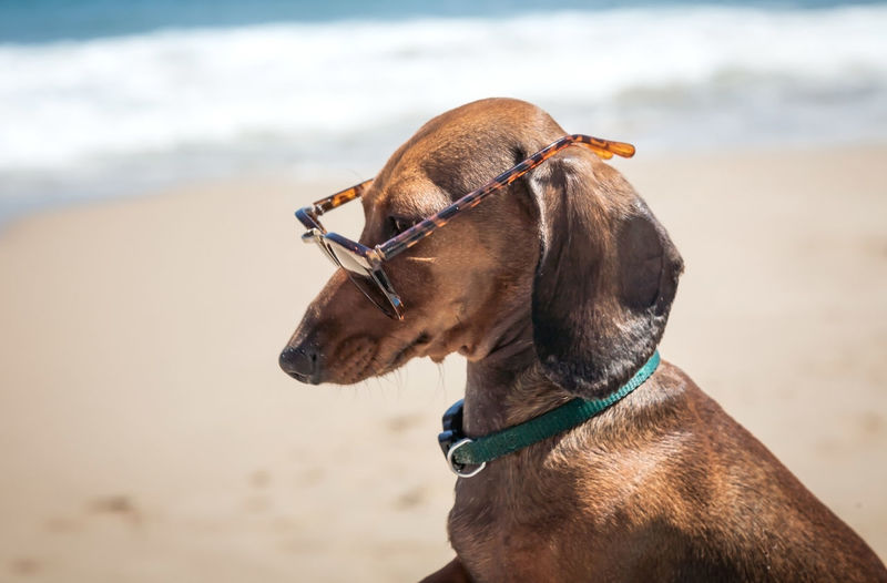 Side view of dog wearing sunglasses while sitting at beach