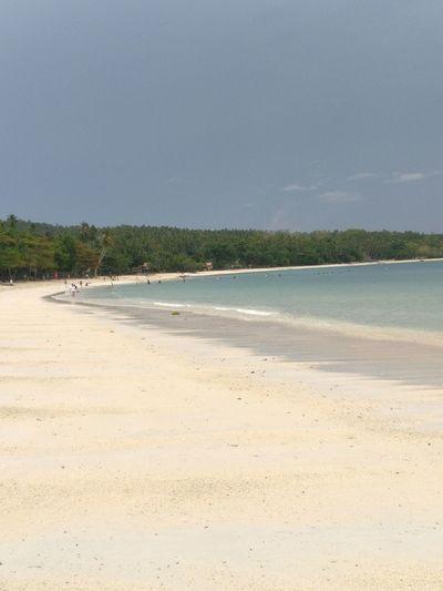 Water Swimming Sea Full Length Beach Tree Sand Clear Sky Bird Water's Edge Coastal Feature Coastline Seascape Nature Reserve Calm