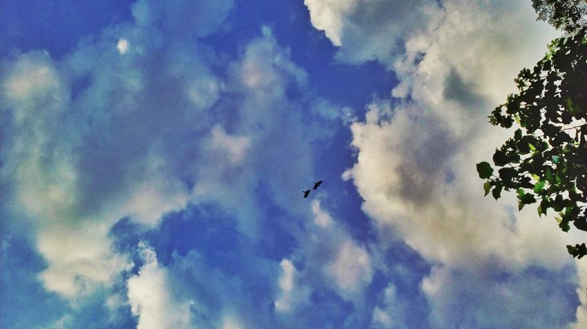 Cloud - Sky Low Angle View Flying Sky Bird Day Outdoors No People Nature Blue Animal Themes Beauty In Nature Tree Natural Beauty Colors Of Nature EyeEm Gallery Nature Photography Clouds And Sky Birds🐦⛅ Flyingbirds Art Is Everywhere Naturephotography