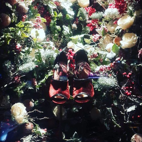 Flowers Shoes Windows Shopping Mall Christmas Christmas Decoration Tree Celebration Red Christmas Tree Christmas Ornament Adults Only Women Outdoors People Adult Close-up Day Only Women