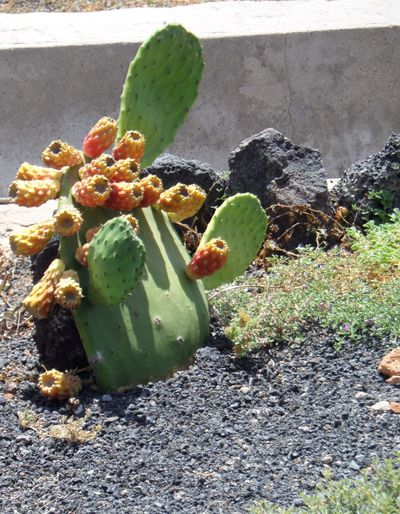 Botany Cacti Plant. Close-up Day Flowering Cacti Plant Green Color Ground Growing Growth Leaf No People Orange Colour Outdoors Plant Shadows.