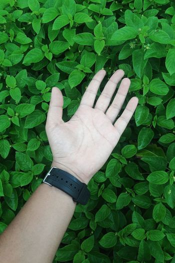 Human Body Part Human Hand Green Color One Person Human Finger People Real People Leaf Lifestyles Day Outdoors Nature Only Men One Man Only Green Color Nature Freshness Flower Hand
