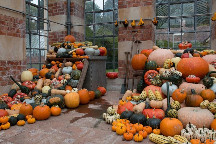 Pumpkins at Tyntesfield Autumn Autumn Collection Autumn Colors Collection Colours Colours Of Autumn Display Fall Fall Colors Pumpkin Pumpkin Display Pumpkinpatch Pumpkins Round Shapes Shapes And Forms Squash Vegtables