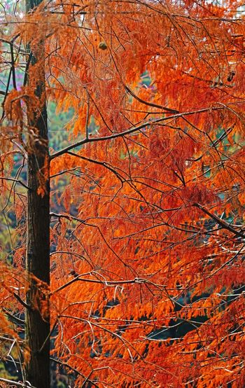 Tree growing in forest during autumn