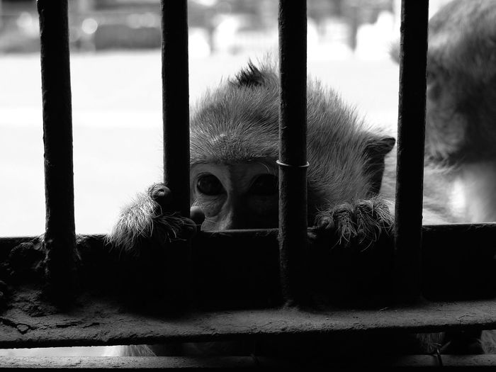 Monkey Thailand Lopburi Temple Check This Out Blackandwhite Panasonic GF1 First Eyeem Photo