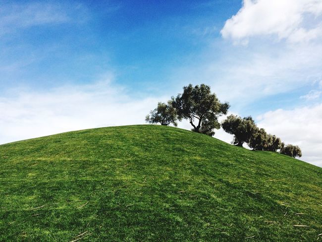 Tree Cloud - Sky Growth Green Color Sky Nature Day Beauty In Nature No People Outdoors Low Angle View Grass Scenics