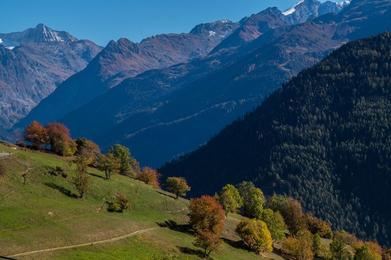 levron,valais,swiss Autumn Collection Mountain Scenics - Nature Tranquil Scene Beauty In Nature Plant Tree Tranquility Landscape Mountain Range Environment Non-urban Scene Nature Sky Idyllic No People Growth Autumn Land Day Green Color Change Outdoors Mountain Peak
