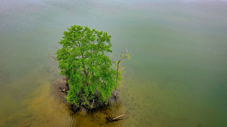 High angle view of plant growing in lake