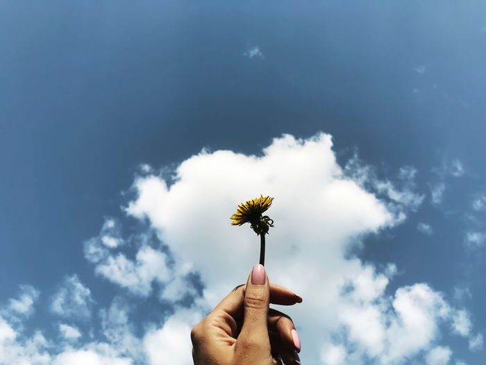 Low angle view of cropped hand holding flower against sky