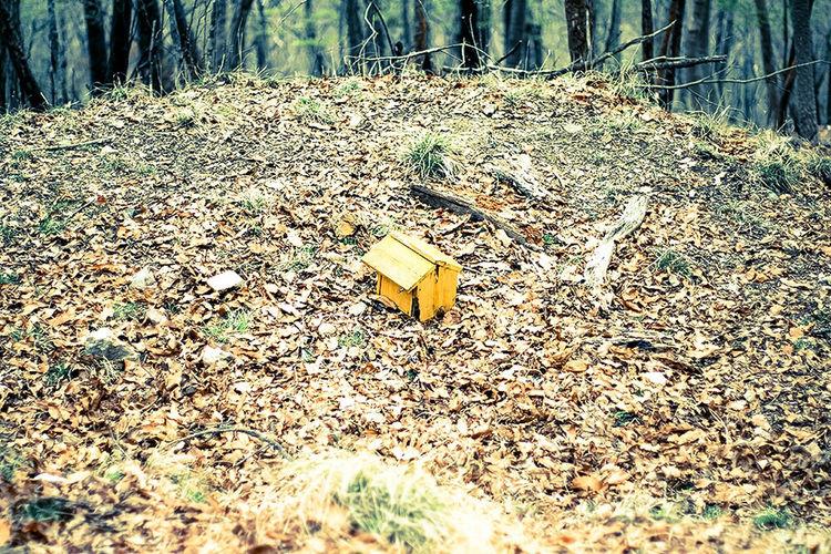 自然 散歩 Nature 妙見山 妙見の森 Woods Sony α700 Lightroom