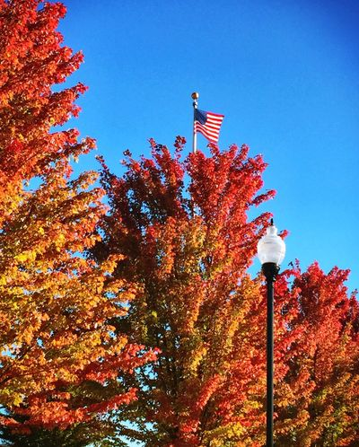 Autumn in the mountains Tree Street Light Autumn Beauty In Nature Scenics Nature Clear Sky Season  Flag American Flag
