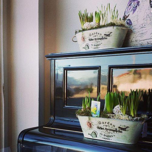 Lo mejor de nuestro Piano hoy ademas de las preciosas composiciones de Bulbos es el precioso cielo azul que se refeja. ¿lo veis? Alefloristerias Springiscomming Bulbs Daffodils Narcissus Hyacinthus Muscari