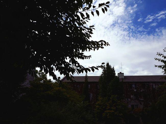 나무, 건물, 그리고 하늘 건물 구름 하늘 필터 Korea 풍경 시골 감성 Blue Blue Sky 감성사진 기숙사 나무 Tree Sky Tree Bird Sky Architecture Building Exterior Office Building