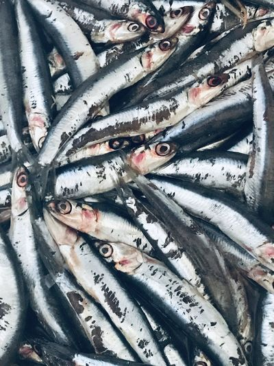 High angle view of anchovies