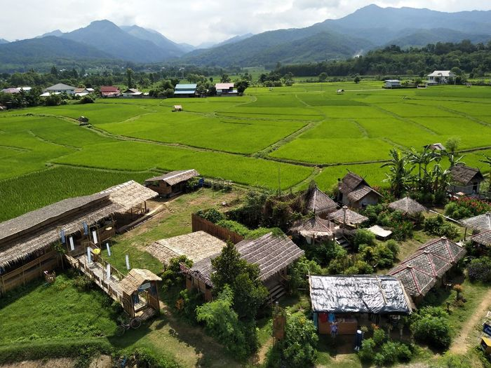 Scenic view of agricultural field and houses in village