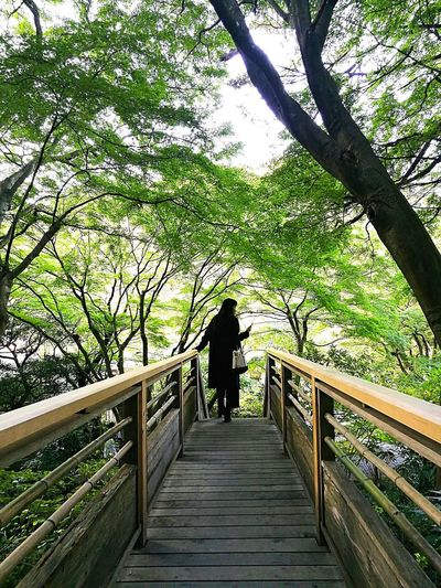 癒される Tree Nature Beauty In Nature Green Color Relaxing Nature Walking Leaf Refreshment Scenics Starting The Day Hearing Traveling Holiday Forest Warking Around Happy People