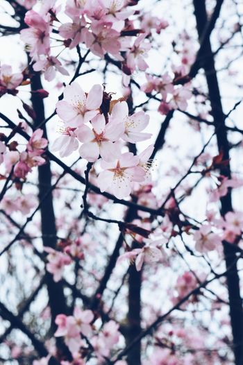 Millennial Pink Nature Flower Tree Springtime Beauty In Nature Pink Color Blossom Fresh On Eyeem  Sommergefühle Neon Life