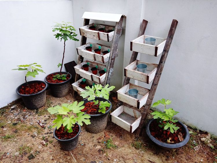 สวน ปลูก ต้นไม้ ต้นไม้สวย Potted Plant Plant
