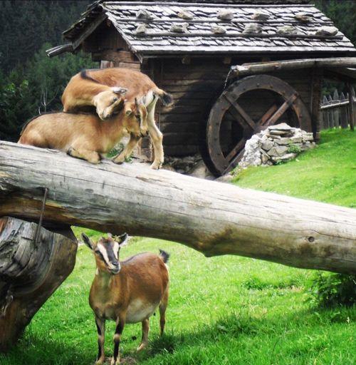 Capture The Moment affinità Love Eye4photography  EyeEm Best Shots Nature Animals Italy Enjoying Life