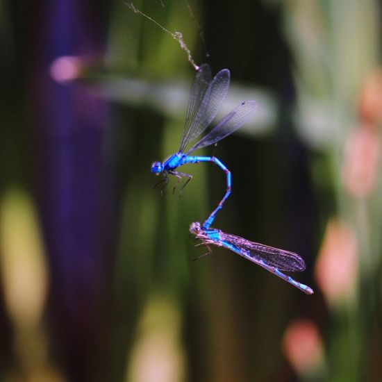 Insect Animal Themes Focus On Foreground One Animal Animals In The Wild Damselfly Close-up Day Nature Outdoors No People Animal Wildlife Fragility Beauty In Nature Breathing Space