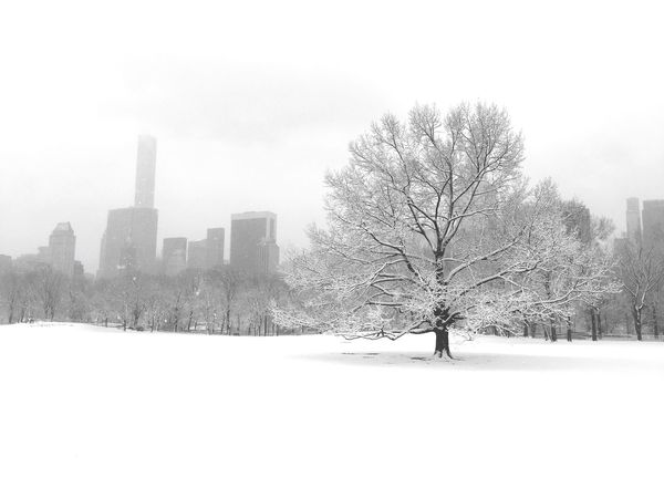 Snow Upper West Side Skyscraper Sheepmeadow Central Park Mybackyard Myworld Trees White Blackandwhite Skyscrapers New York New York City