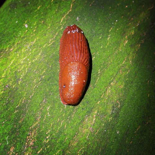 🐌 Slug Slugs Snail Collection Snail Animal Animals In The Wild Animal Wildlife Animals EyeEm Best Shots - Nature Eyeem Best Shots - Animals Macro Photography Followme Nature Photography Naturelovers Eye4photography  EyeEm Nature Lover EyeEm Best Shots - Macro / Up Close Follow4follow Nature_collection EyeEm Best Shots Animal_collection Animallovers Tree No People Green Color Nature Outdoors Close-up Animal Themes